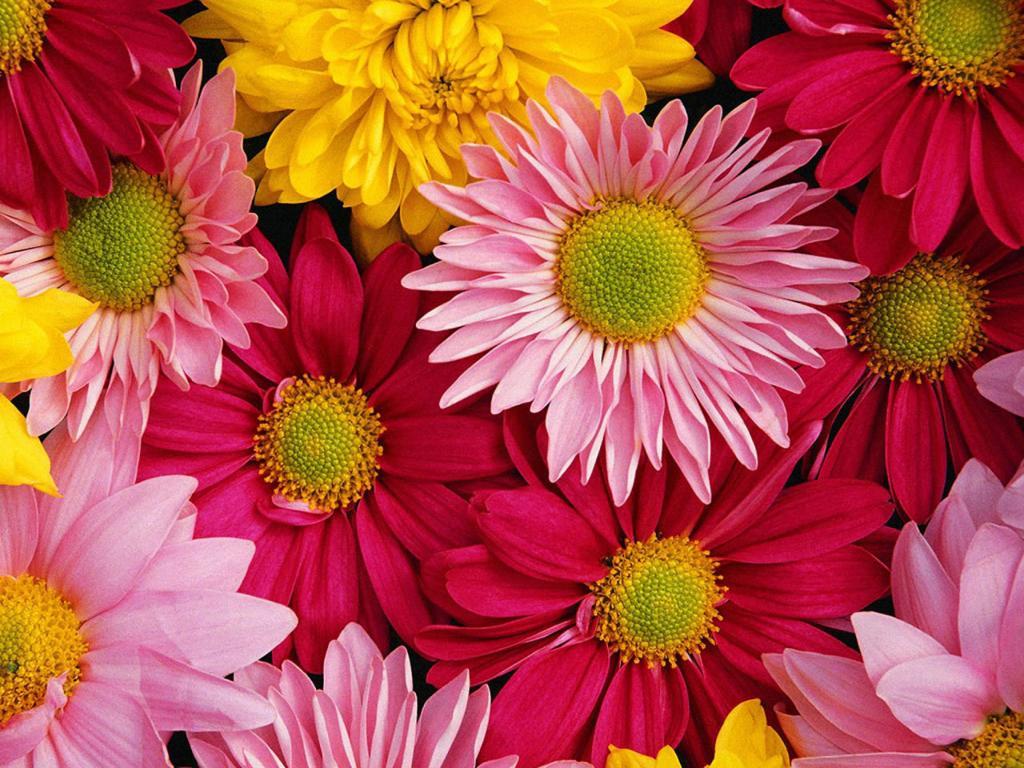 Květiny na desktop